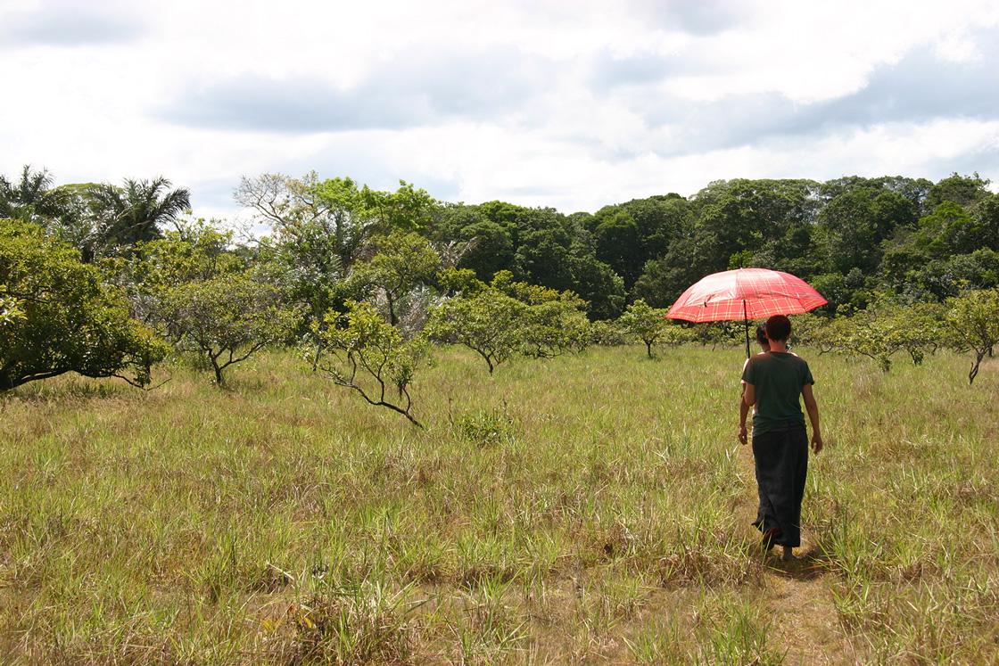 Se promener savanes de guyane for Ou se promener dans les yvelines