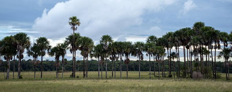 Ligne-de-palmiers-bache-Florent-Taberlet