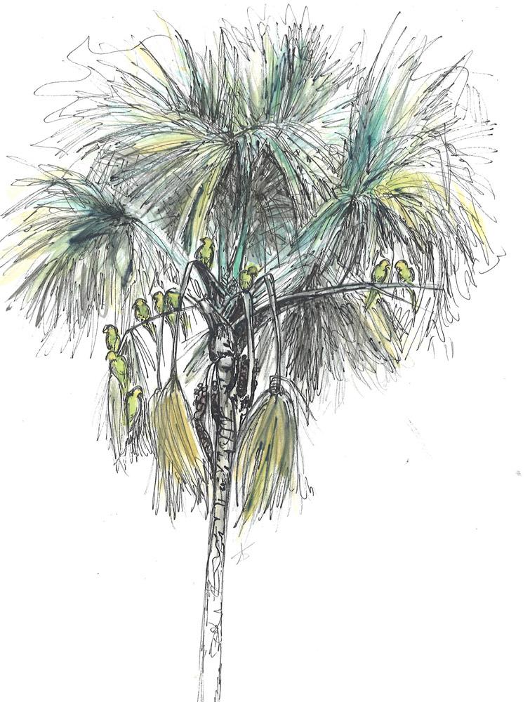 Palmier bâche © Anna-Stier