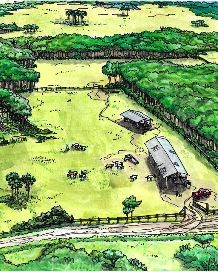 Elevage bovin actuel en savanes © Jean-Pierre Penez