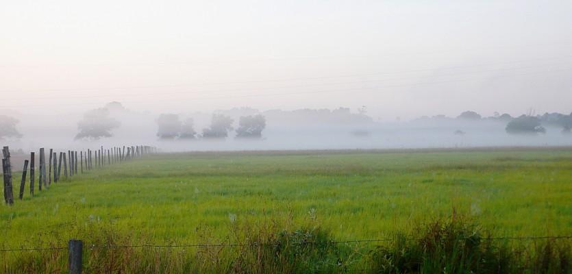 WEB-ambiance-matinale-dans-une-prairie-a-sinnamary-©-nyls-de-pracontal