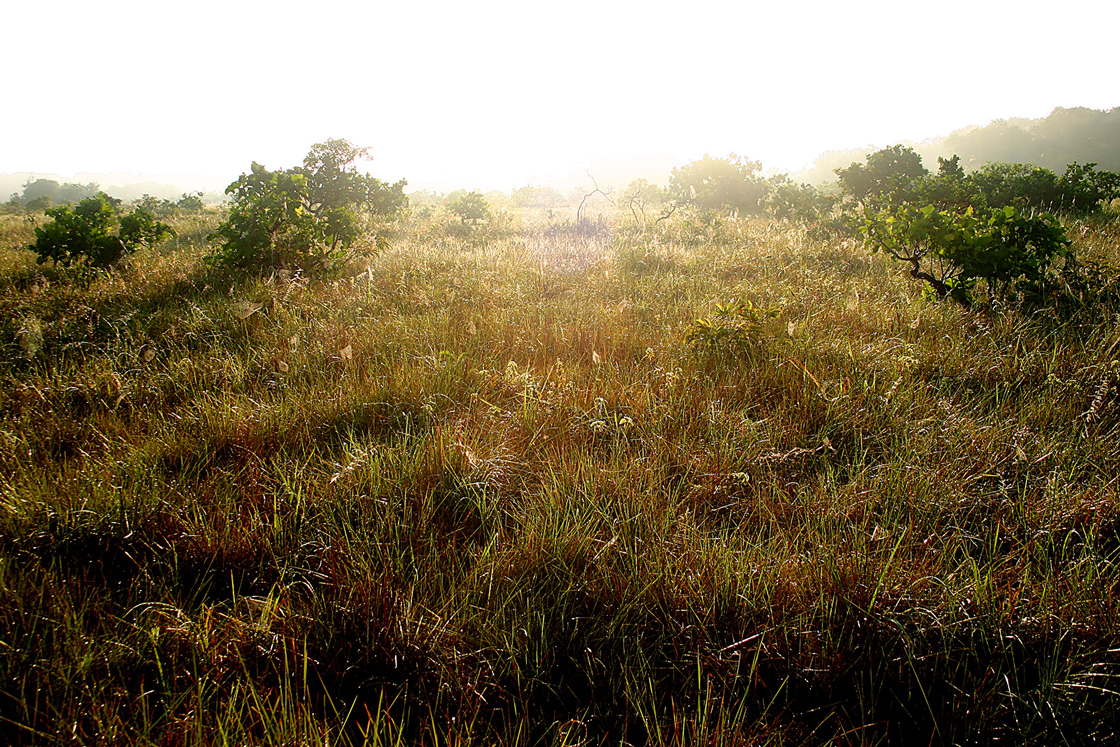 WEB-lever-de-soleil-sur-la-savane-Rener-du-CSG-©-Stier-A