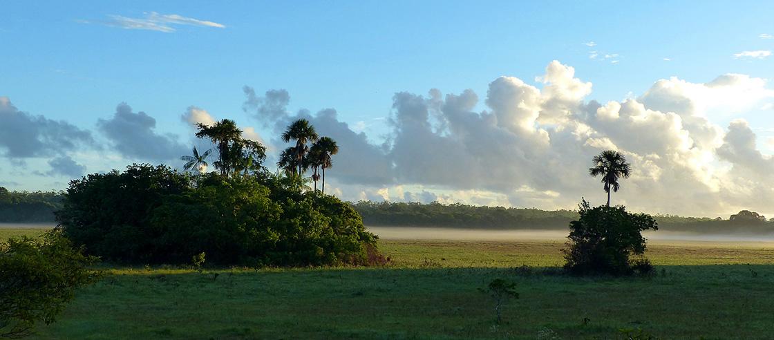 WEB-recadre-savane-grand-macoua-au-lever-du-soleil-©-Stier-A
