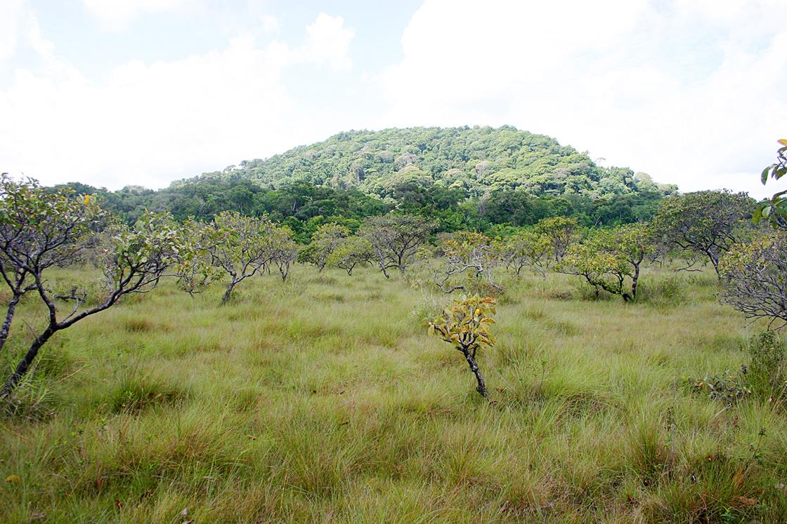 Savanes remarquables savanes de guyane - Felin de la savane ...